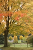 Herbst-12.11