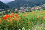 Sommer-0x.01---Blick-mit-Mohnblumen-aufs-Dorf